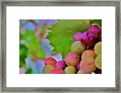 Juicy Framed Print by Ericka Adabashi