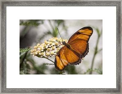 Julia Butterfly Framed Print by Adam Romanowicz