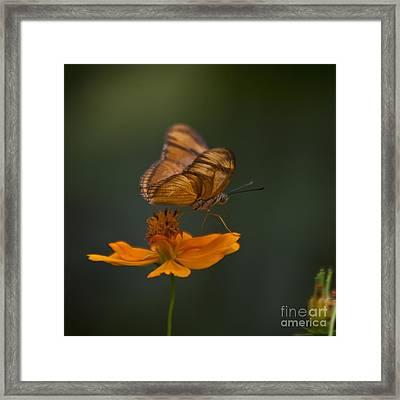 Julia Butterfly Framed Print by Heiko Koehrer-Wagner