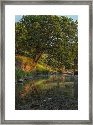 July Morning Along The Creek Framed Print