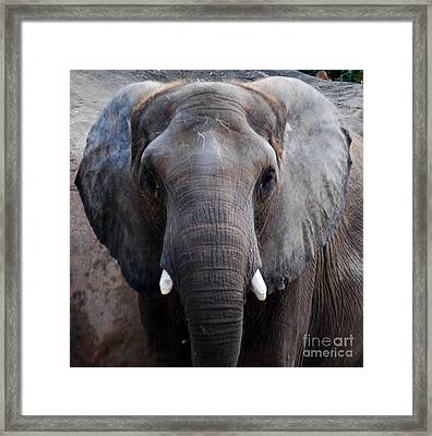 Framed Print featuring the photograph Jumbo by Nancy Bradley