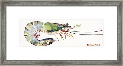 Jumbo Shrimp Framed Print by Chelsea Scott