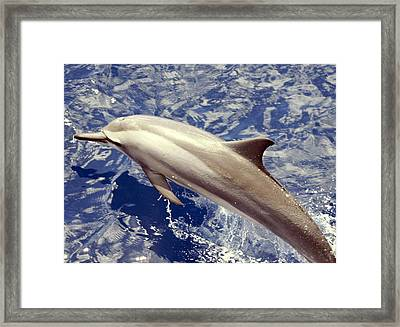 Jump For Joy Framed Print by Paula Marie deBaleau
