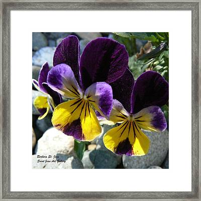 Jump Up And Kiss Me Framed Print by Barbara St Jean
