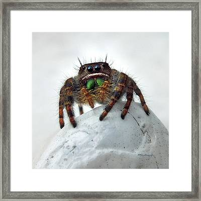 Jumper Spider 2 Framed Print
