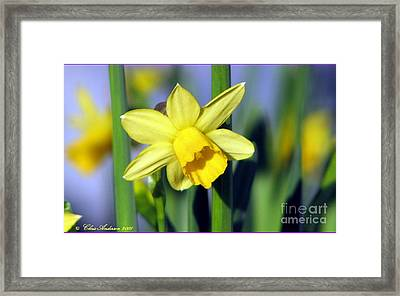 Jumpin For Joy Framed Print by Chris Anderson