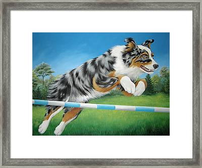 Jumping Aussie Framed Print by Tish Wynne