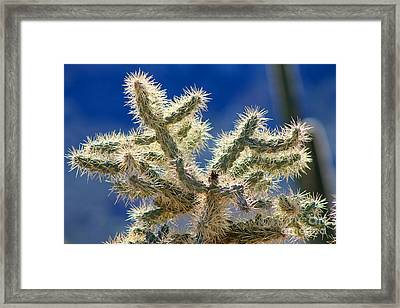 Jumping Cholla Framed Print