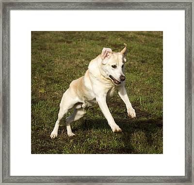 Jumping Into The Game Framed Print by Jean Noren