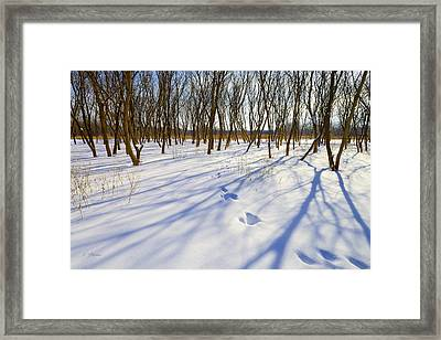 Jumping Shadows  Framed Print by Ben Thompson