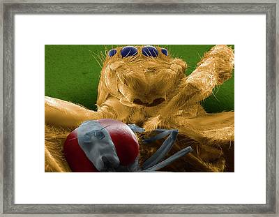 Jumping Spider Catching Prey Framed Print