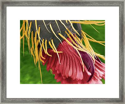 Jumping Spider's Fangs Framed Print