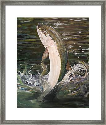 Jumping Steelhead Framed Print