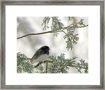 Framed Print featuring the photograph Junco In Snowstorm by Paula Guttilla