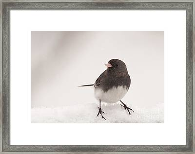 Junco In The Snow Framed Print