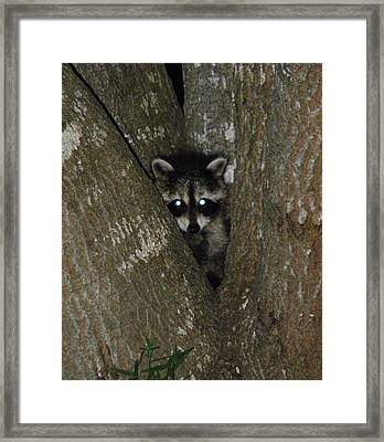 Baby Raccoon And Jesus Framed Print