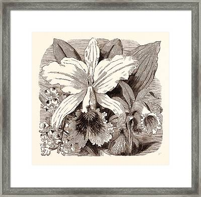 June. Aerides Quinquevulnera. Cattleya Mossiae Framed Print by English School