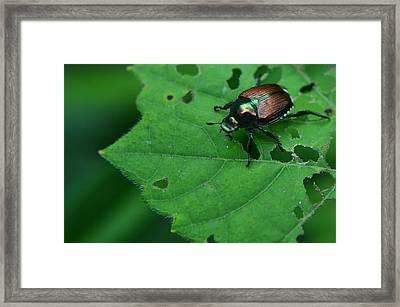 June Bug 1 Framed Print by Jeffrey Platt