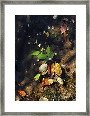 June Gathering 2 Framed Print by Gregory Arnett