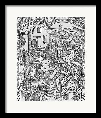 Almanac Framed Prints