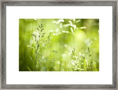 June Grass Flowering Framed Print by Elena Elisseeva