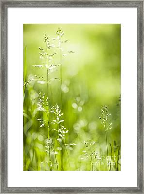 June Green Grass  Framed Print by Elena Elisseeva