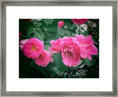 June Rose II Framed Print