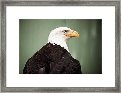 Juneau, Alaska, Usa Framed Print by Sergi Reboredo