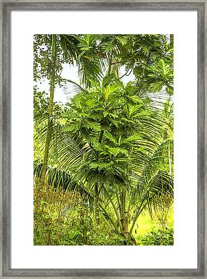 Jungle And Rice Field Framed Print by Regina Koch