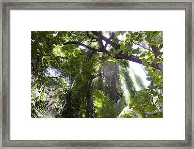 Jungle Canopy Framed Print