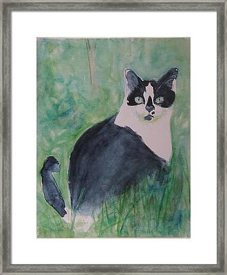 Jungle Cat Framed Print