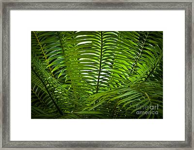 Jungle Fern Framed Print