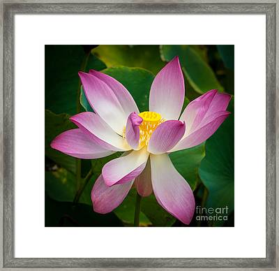 Jungle Garden Flower Framed Print