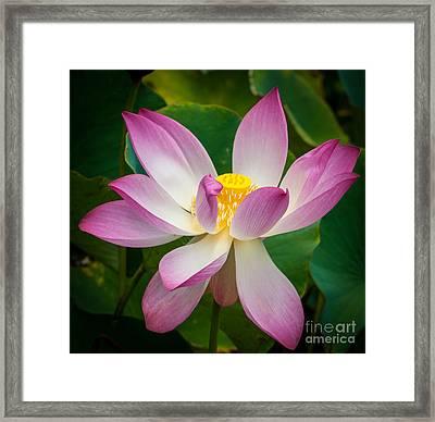 Jungle Garden Flower Framed Print