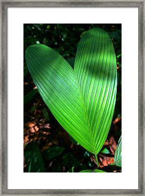 Jungle Heart Framed Print