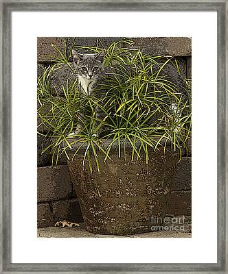 Jungle Kitty All Profits Go To Hospice Of The Calumet Area Framed Print