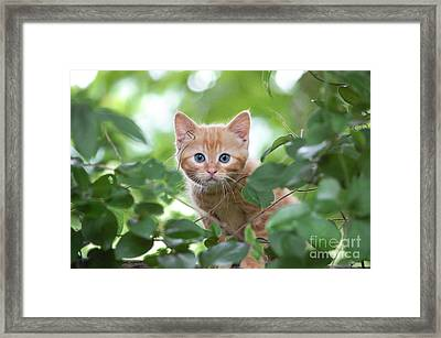 Jungle Kitty Framed Print by Debbie Green