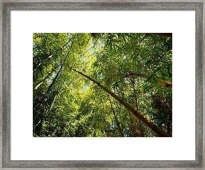 Jungle Life  Framed Print by A Rey