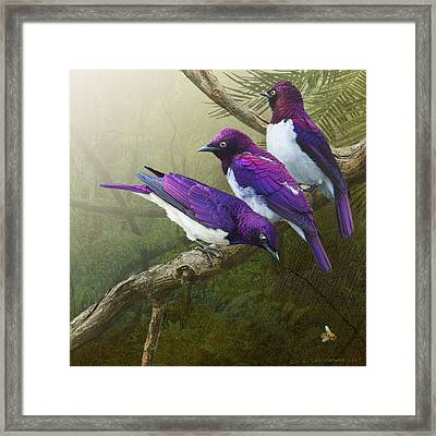 Jungle Mist -amethyst Starlings   Framed Print by R christopher Vest