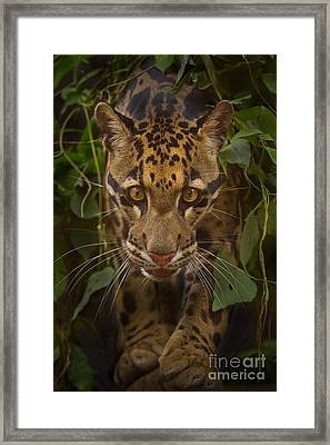 Jungle Prince Framed Print