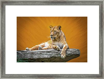 Jungle Queen Framed Print