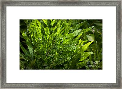 Jungle Spotted Fern Framed Print