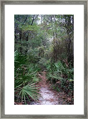Jungle Trek Framed Print by David Troxel