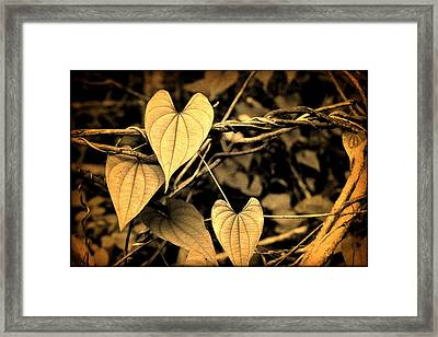 Jungle Vines Framed Print by Milton Thompson