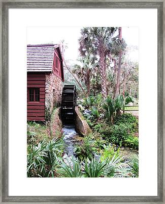 Jungle Water Framed Print by Will Boutin Photos