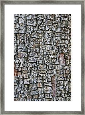 Framed Print featuring the photograph Juniper Bark- Texture Collection by Tom Janca