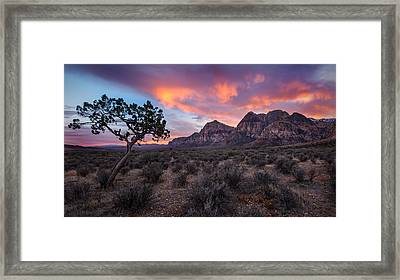 Juniper Sunset Framed Print