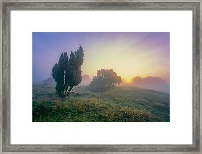 Juniper Trees In Early Morning Fog  Framed Print by Martin Liebermann