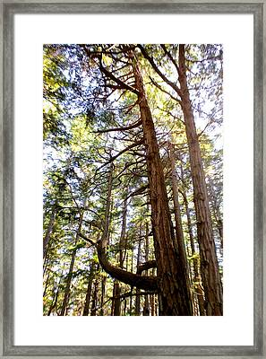 Jurassic Trees Framed Print by Brian Sereda