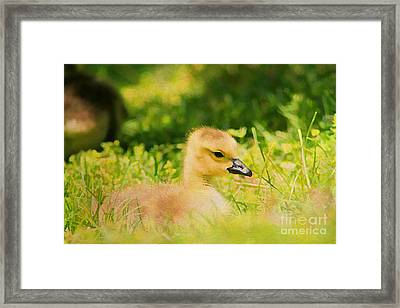 Just A Baby Framed Print by Darren Fisher